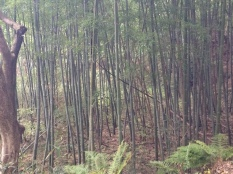 Bamboo groves always stand out given how different they look compared to all the other trees.