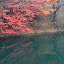More beautiful leaves reflected on the water's surface.